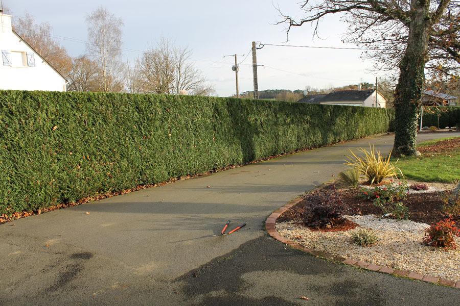 Photo entretien jardin langon gicquel service vert for Entretien jardin 16